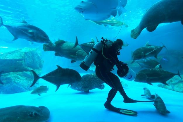 Peces en acuario