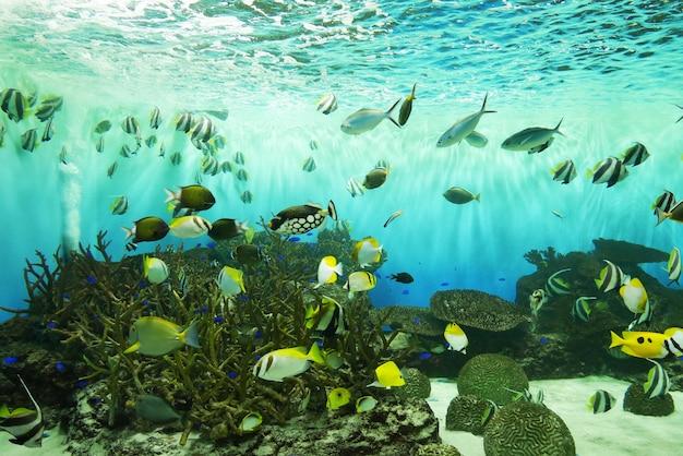 Peces bajo el agua en el acuario