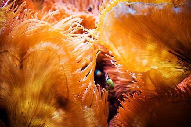 Los peces y el arrecife de coral