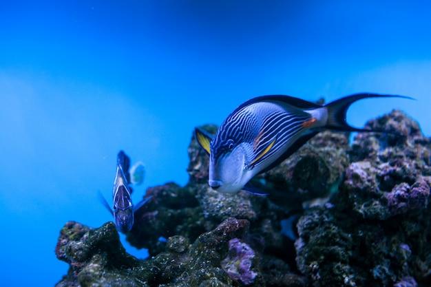 Peces coral acuario arrecife mar