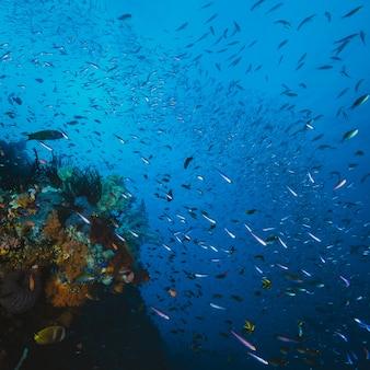 Peces y coral