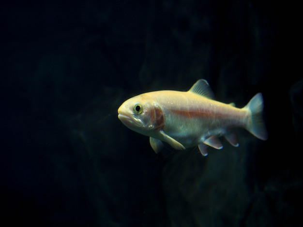 Peces habitantes de las profundidades del mar en el mar, hermosos peces, buceo en el mar.