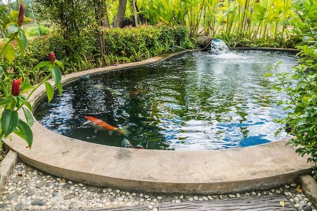 Peces koi en estanque de jardín