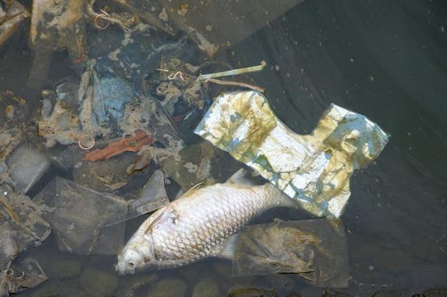 Peces muertos, basura en aguas residuales
