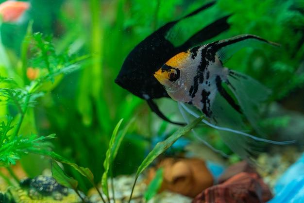 Peces multicolores en un acuario