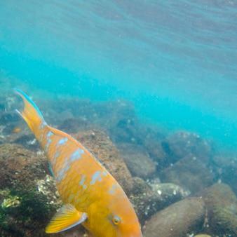 Peces nadando bajo el agua, puerto egas, santiago island, islas galápagos, ecuador