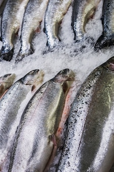 Los peces salmón marino se encuentran en el hielo en la tienda o en la cocina