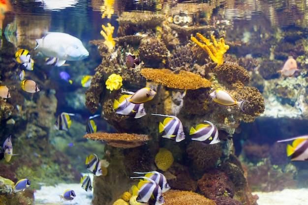 Peces tropicales en el área de arrecifes de coral