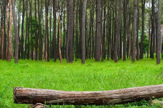 Pedazo de madera en el bosque sobre hierba verde
