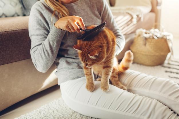 Peinar gato jengibre con cepillo peine en casa. mujer propietaria cuidando a la mascota para eliminar el vello animales limpios