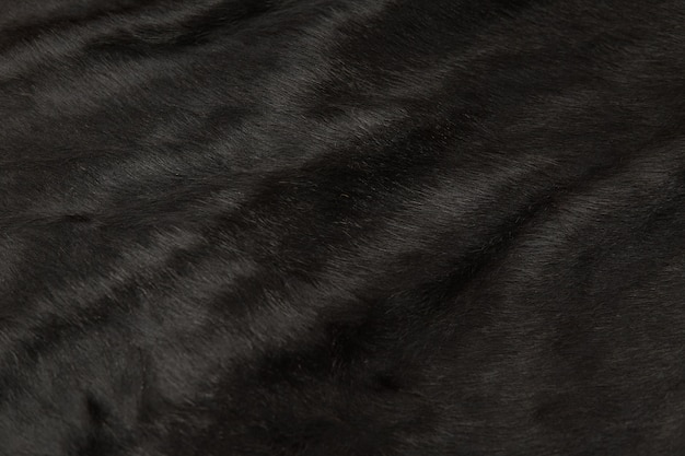Pelo de animal de piel de vaca.