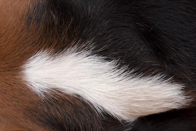 Los pelos del perro son marrones, blancos y negros.