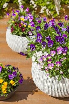 Pensamiento hermoso verano flores en macetas en jardín