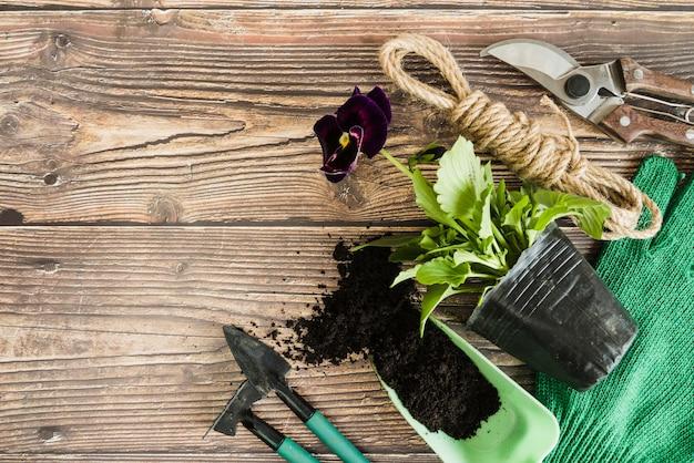 Pensamiento violeta planta de maceta con suelo; herramientas de jardinería; cuerda y tijeras de podar en mesa de madera.