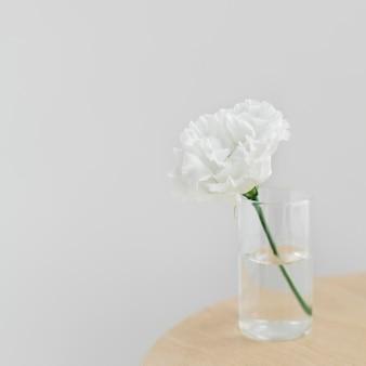 Peonía blanca en un jarrón despejado