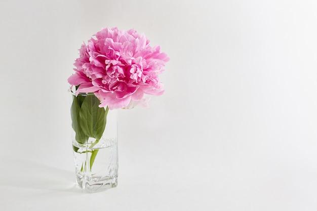 Peonía en un vaso sobre blanco
