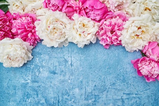 Peonías blancas y rosadas en azul. vacaciones, copia espacio