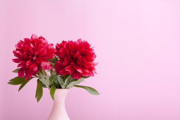 Peonías de borgoña en un jarrón sobre un fondo rosa
