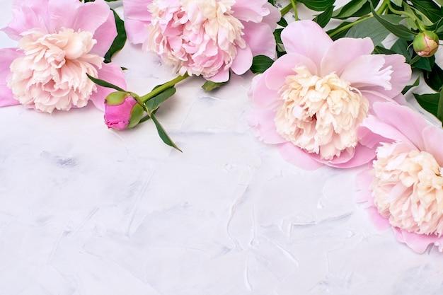 Peonías rosas en blanco.