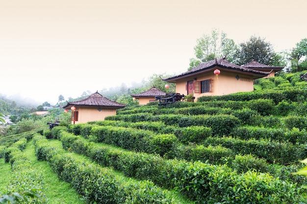 Pequeña cabaña en la plantación de té mae hong son