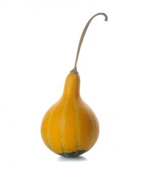 Pequeña calabaza amarilla decorativa sobre fondo blanco aislado