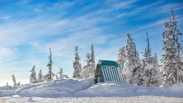 Pequeña casa cubierta de nieve rodeada de pinos en la escarcha