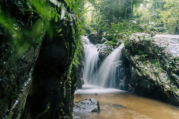 Pequeña cascada hermosa en el bosque