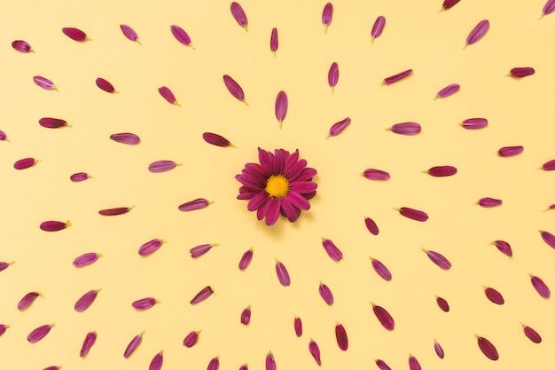 Pequeña flor con pétalos sobre tabla amarilla.