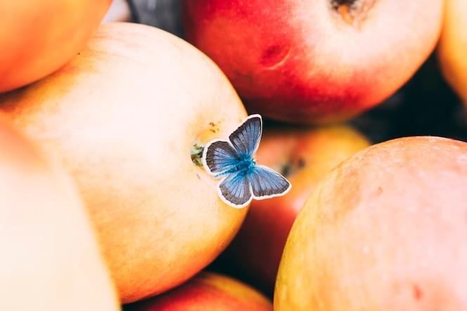 Pequeña mariposa en manzanas