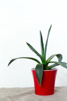 Una pequeña planta de agave en una maceta roja se levanta sobre tela natural en la consola blanca frente a la pared blanca