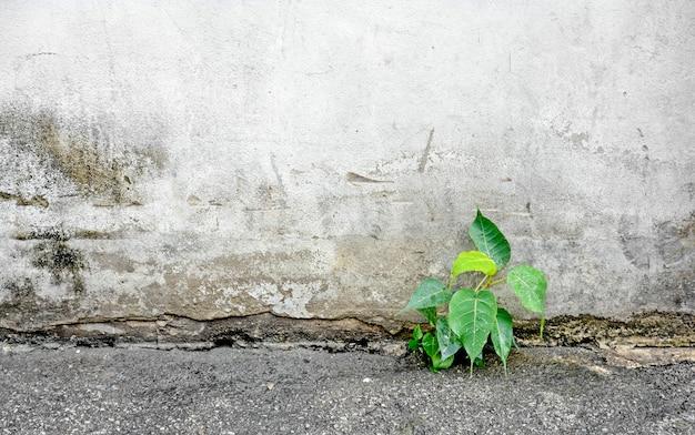 La pequeña planta germina en el fondo de la pared de la calle