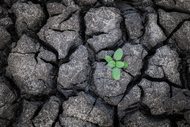 Pequeña planta que crece de barro seco y agrietado.