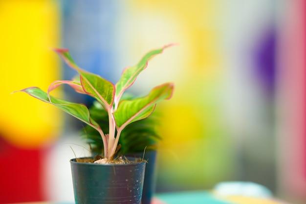 Pequeña planta que maceta en desenfoque colorido