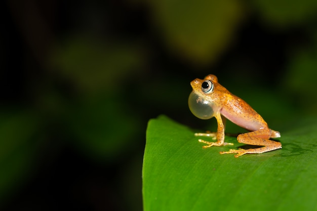 Una pequeña rana naranja está sentada sobre una hoja