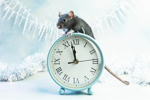 Pequeña rata gris linda, el ratón se sienta con relojes antiguos.
