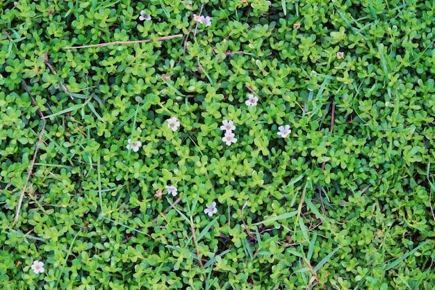 Pequeña textura de fondo de hojas y flores