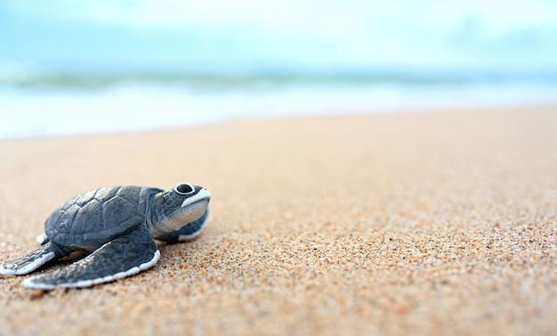 Pequeña tortuga en una playa blanca