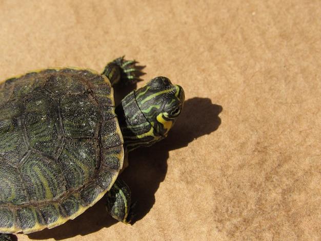 Pequeña tortuga