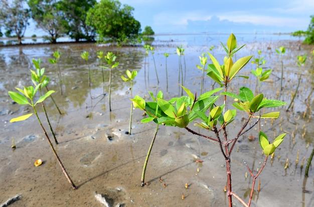 Pequeña zona de bosque de manglar.