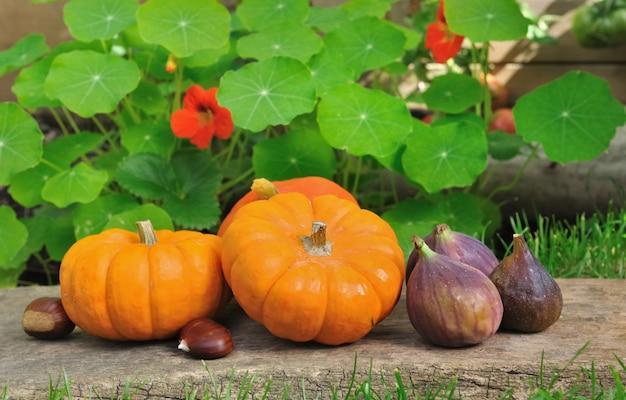 Pequeñas calabazas y frutas de temporada.