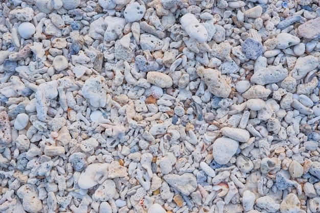 Pequeñas conchas marinas, piedras en la playa del mar como fondo y textura