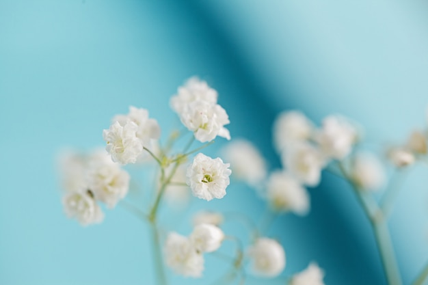 Pequeñas flores blancas gypsophila sobre fondo azul