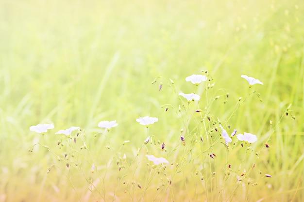 Pequeñas flores de color púrpura en un campo verde, filtro