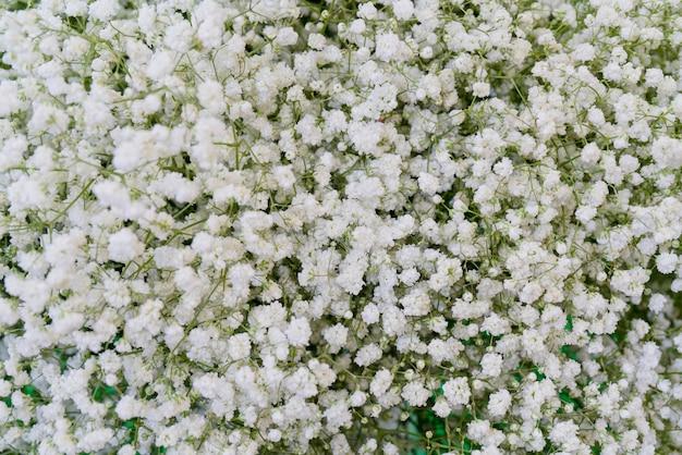 Pequeñas flores decorativas hermosas.