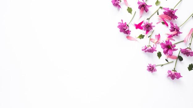 Pequeñas flores moradas con pétalos esparcidos sobre mesa.