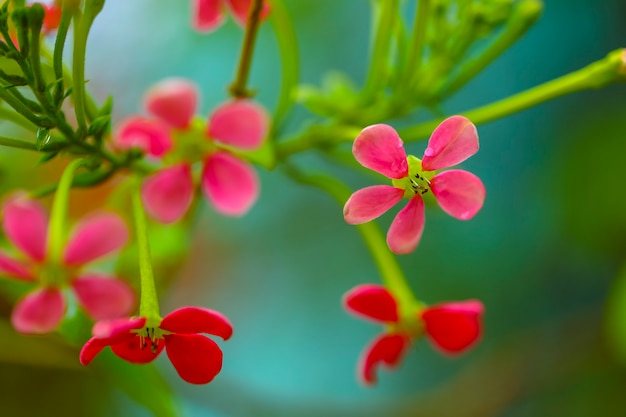 Pequeñas flores rojas y rosadas sobre fondo verde, enfoque selectivo