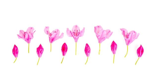 Pequeñas flores rosadas y brotes aislados en blanco