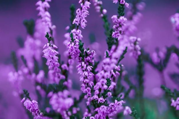 Pequeñas flores sobre un fondo suave teñido al aire libre
