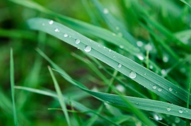 Pequeñas gotas de lluvia sobre la hierba verde
