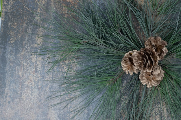 Pequeñas piñas en una rama de árbol verde sobre fondo de mármol. foto de alta calidad